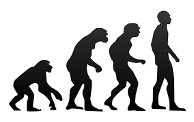 Is the theory of evolution true